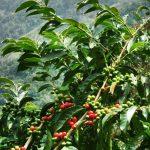 Batukaru Agrotourism