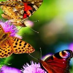 Bali Butterfly Park, Countryside Tour