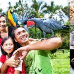 Bali Bird Park + Barong, Ubud Tour + Spa