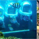 Ocean Walker + Ubud, Kecak Dance Bali Tour