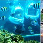 Ocean Walker + Tanah Lot Sunset Bali Tour