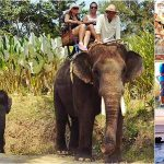 Bali Elephant Ride + Ubud, Tanah Lot Tour