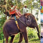 Bali Elephant Ride + Bedugul Tour