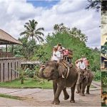 Bali Elephant Ride + Rafting, Kecak Fire Dance Tour