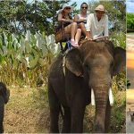Bali Elephant Ride + Uluwatu, Dinner Tour