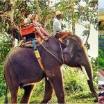 Bali Elephant Ride + Horse Riding, Ubud Tour