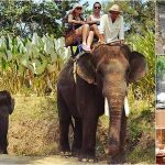 Bali Elephant Ride + ATV, 2 Hours Spa