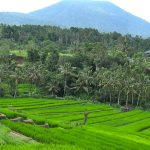 5 Days Bali Land Tour Package