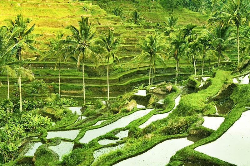 Tegalalang Rice Terrace - BaliMagicTour